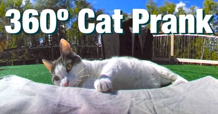 دانلود فیلم 360 درجه واقعیت مجازی شوخی با گربه ها