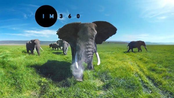 دانلود فیلم 360 درجه واقعیت مجازی زندگی در کنار فیل ها