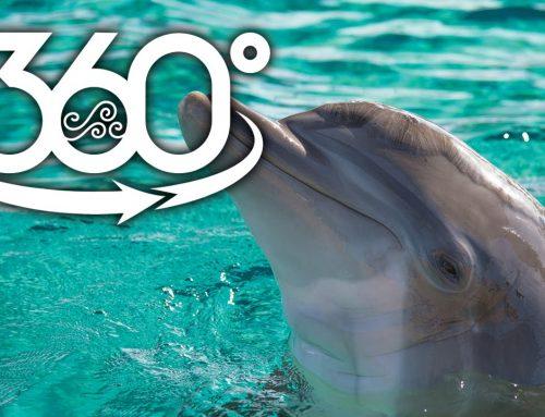 حضور در کنار دلفین ها