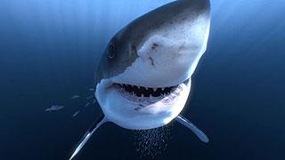 دانلود فیلم واقعیت مجازی زیر دریا با کوسه ها