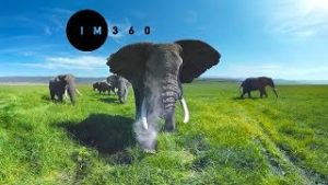دانلود فیلم ویدئوی واقعیت مجازی Surrounded by Wild Elephants in 4k 360