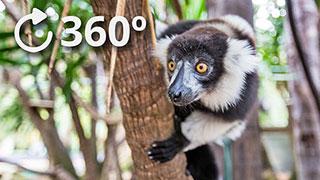 دانلود فیلم واقعیت مجازی حیوانات عجیب در جنگل