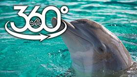 دانلود فیلم واقعیت مجازی در کنار دلفین ها